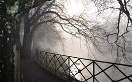 Preview wallpaper Dawn, river, fence, trees, fog, park