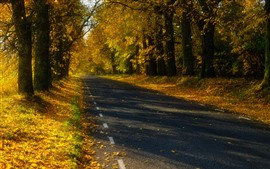 Preview wallpaper Estonia, trees, road, autumn, shadow, sunshine