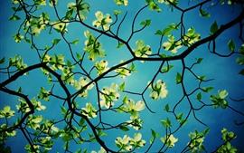 Flores, cornejo, hojas verdes, ramitas.
