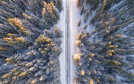 Bosque, camino, nieve, invierno, vista superior.