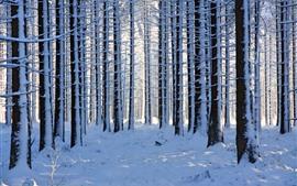 Bosque, árboles, nieve espesa, invierno