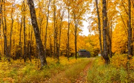 Preview wallpaper Golden autumn, trees, path, hut