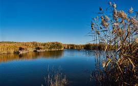 Césped, cañas, lago, cielo azul