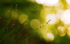 미리보기 배경 화면 잔디, 씨앗, 밝은 빛 원