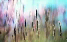 Preview wallpaper Grass, seeds, hazy background