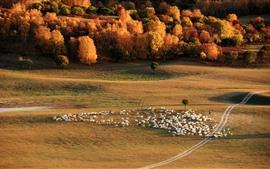 Pastizales, árboles, ovejas, otoño, China
