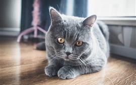 Gato gris, vista frontal, ojos amarillos, piso.