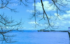 Preview wallpaper Great Barrier Reef, blue sea, pier, twigs, Queensland, Australia