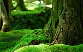 Preview wallpaper Green moss, trunk, hazy