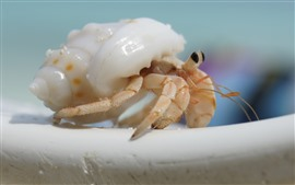 Preview wallpaper Hermit crab, shell