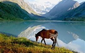 Caballo, lago, montañas, naturaleza.