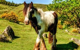 Paseos a caballo, césped, sol, sombra
