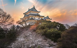 Preview wallpaper Japan, temple, trees, dusk