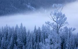 冬、木、雪、霧、中国の喀納斯