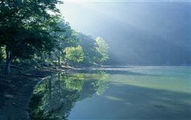 Lakeshore, lago, árvores, raias do sol, manhã