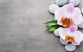 Preview wallpaper Light pink phalaenopsis, cobblestone