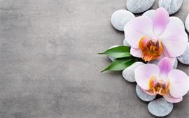 Luz rosa phalaenopsis, calçada