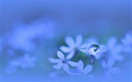 Preview wallpaper Little flower, water drop, macro photography, hazy