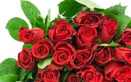 Many red roses, flowers, white background