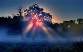 Morning, trees, fog, sun rays