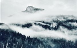 Montañas, niebla, árboles, fotografía en blanco y negro.