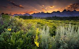 Paisagem da natureza, montanhas, árvores, arbustos, por do sol