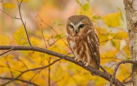 Preview wallpaper Owl, tree, wildlife