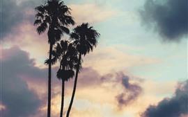 壁紙のプレビュー ヤシの木、雲、夕日、シルエット