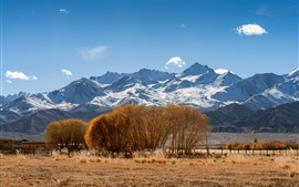 Pamirs, snowy mountains, trees, grass, autumn