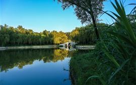 Парк, мост, озеро, трава, Ива