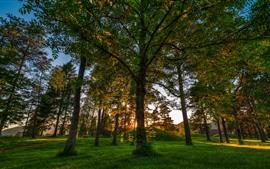 Parque, arboles, rayos de sol, verde, mañana.
