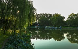 Preview wallpaper Park, willow, green, pond, lotus, morning, sun