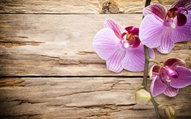 Preview wallpaper Pink phalaenopsis, wood board