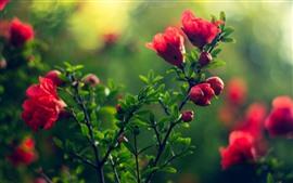 Fleurs rouges, feuilles vertes, brumeuses