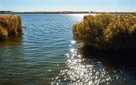 Cañas, lago, agua, brillo
