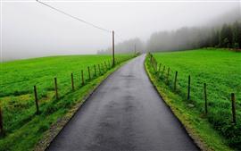 Camino, campos verdes, árboles, cerca, niebla, mañana