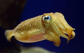 Морское животное, каракатица