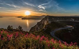 Mar, flores, rochas, estrada, nascer do sol, manhã