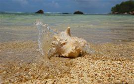 Concha, playa, mar, salpicaduras de agua.