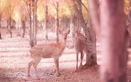 Preview wallpaper Sika deers, trees, hazy