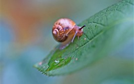 Preview wallpaper Snail, green leaf, hazy