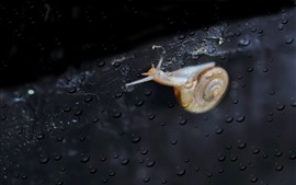Preview wallpaper Snail, water droplets