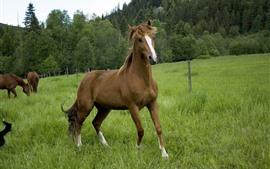 Некоторые лошади, зеленый луг