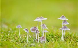 Некоторые грибы, трава, зеленый фон