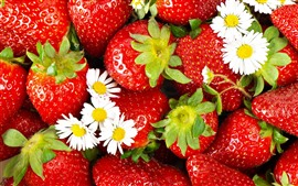 Preview wallpaper Strawberries, white chamomile