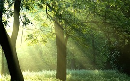 Preview wallpaper Summer, trees, grass, green, sun rays, fog