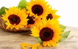 Sunflowers, basket, white background