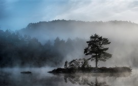 Árvores, nevoeiro, rio, amanhecer