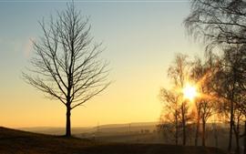 Árvores, nevoeiro, nascer do sol, luz solar, manhã