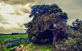 Деревья, зеленое поле, облака, Сумерки